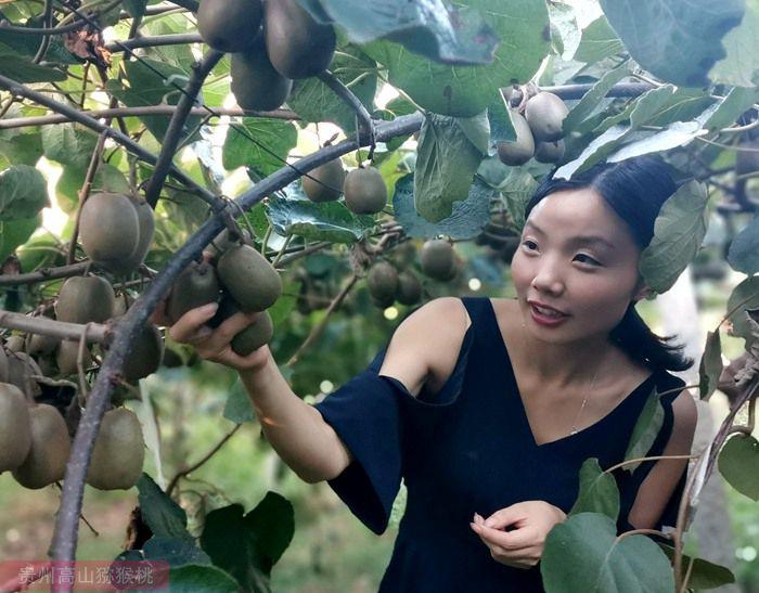 周末去四川成都蒲江采摘红心猕猴桃