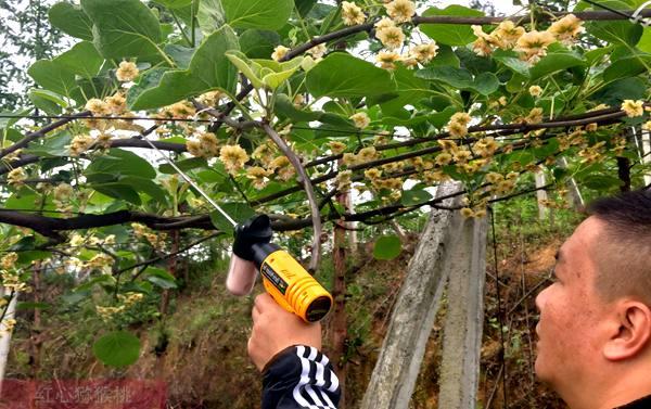 猕猴桃电动授粉工具