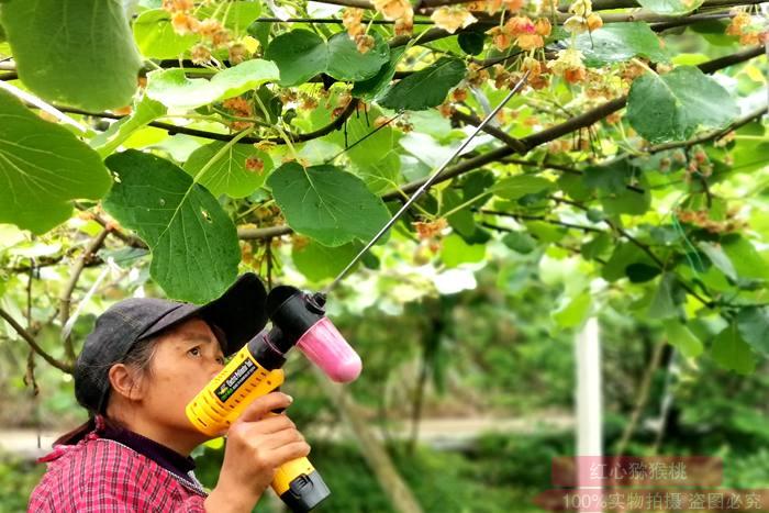 研发出一种简易的手动猕猴桃授粉器