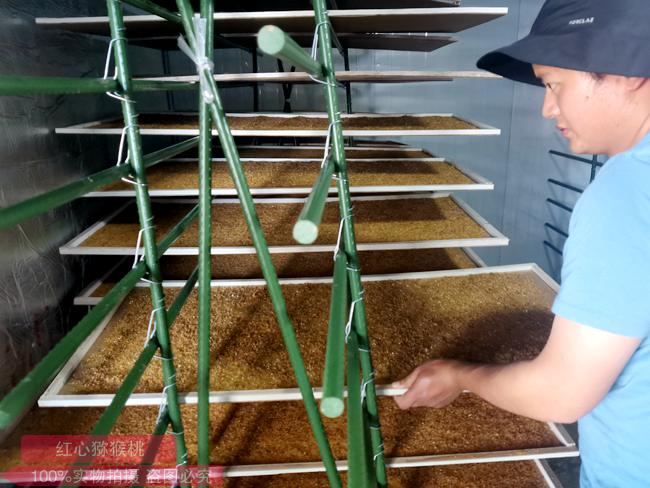红心猕猴桃花粉制作过程