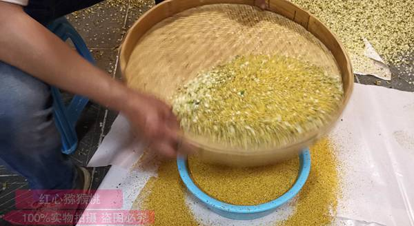东红猕猴桃花粉