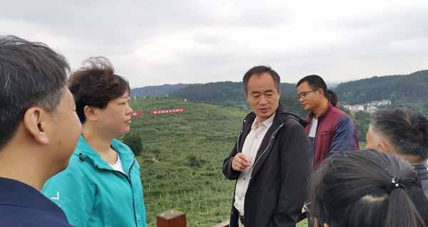 台风过后 猕猴桃果园如何进行田间管理