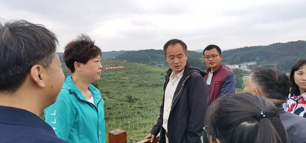 广东引进白白色 在粤北山区发展壮大