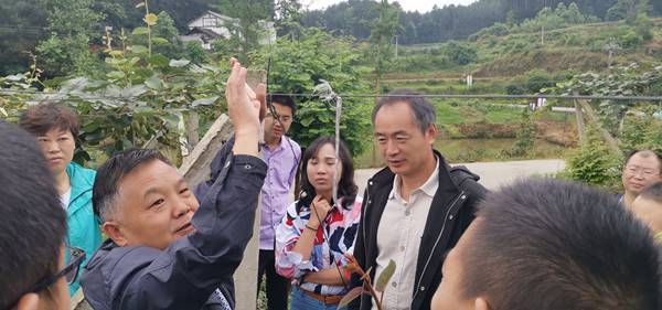中科院武汉植物园是贵州水城县红心猕猴桃产业的重要技术支撑单位之一