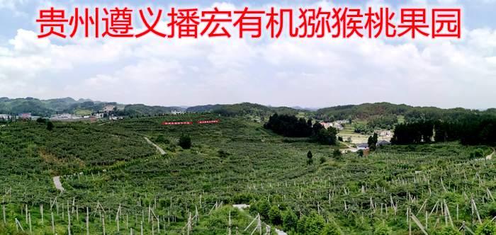遵义山高红猕猴桃专业合作社,位于贵州播州区三岔镇