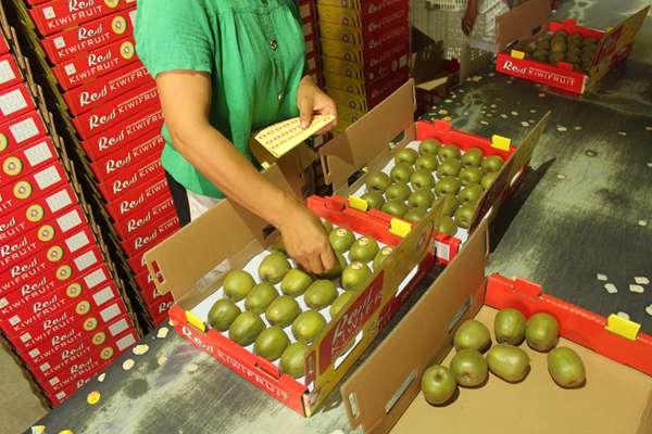 蒲江红心猕猴桃
