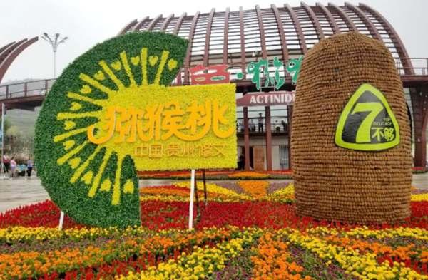 贵州贵定开展猕猴桃冬季田间管理工作