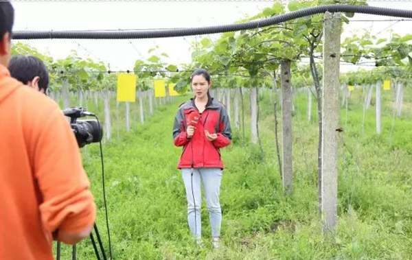 陕西佰瑞研究院共建猕猴桃工程技术研究中心建成了猕猴桃育种栽培贮藏