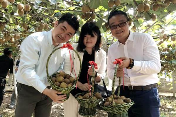 贵州毕节大方猕猴桃正式步入成熟期
