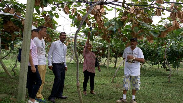 红心猕猴桃一次投资种植多少亩最好 武汉植物所的专家告诉你