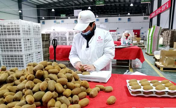 小小猕猴桃 浓浓家乡情 贵州中康果业董事长舒红创业故事