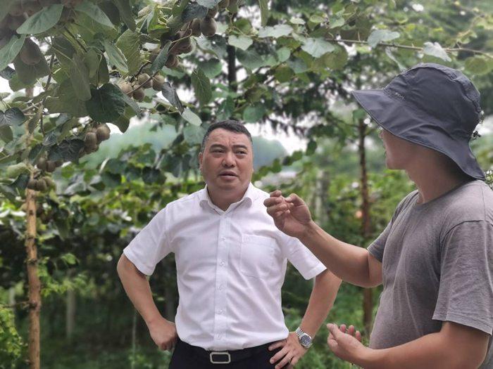 遵义农商银行积极出台各类惠农支农政策 有力支持播州区三岔镇猕猴桃产业发展