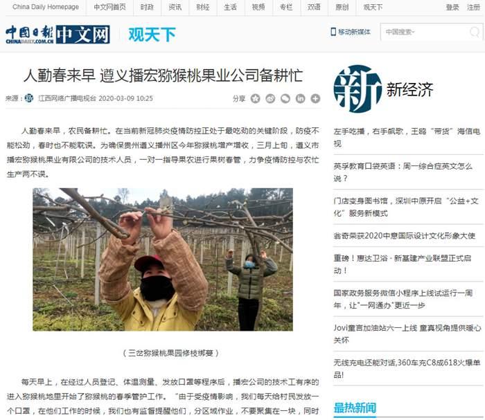 贵州高山有机猕猴桃果园