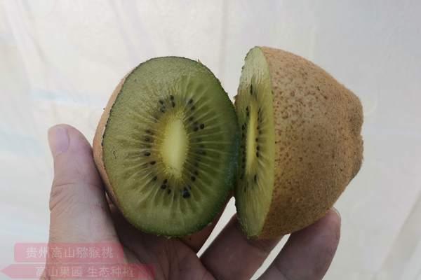 来自湖南的翠玉猕猴桃良种在浙江泰顺成功试种成功