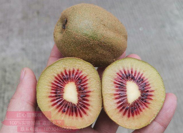 四川成都蒲江红心猕猴桃主要种植品种