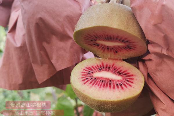 红什猕猴桃