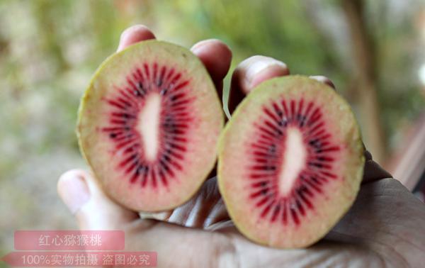 红肉猕猴桃