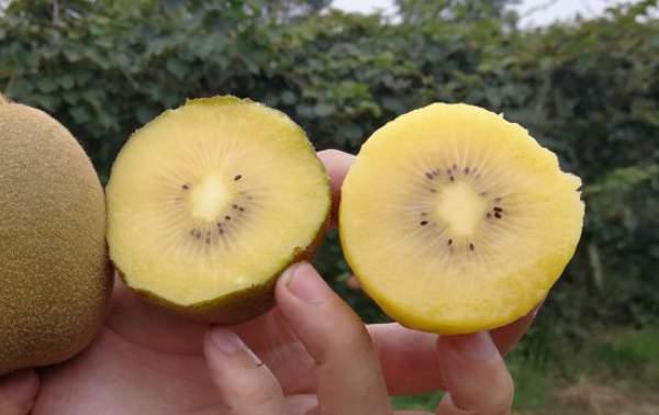 最甜最好吃猕猴桃