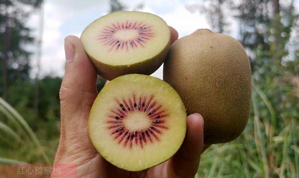 树上成熟的猕猴桃有什么不同