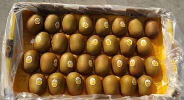 意大利金桃猕猴桃