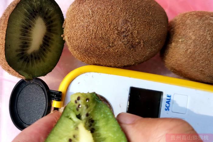 瑞玉猕猴桃品种--史上最甜的绿心猕猴桃品种,完全超越翠香猕猴桃