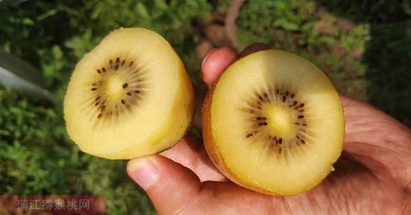 黄心猕猴桃阳光金果