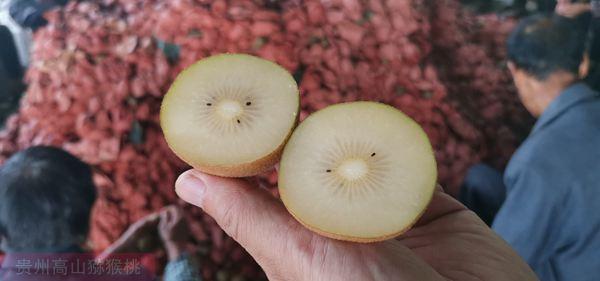 金三猕猴桃
