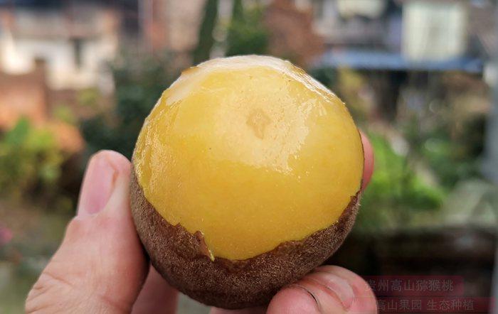 中国凉都行系列之三:猕猴桃飘香