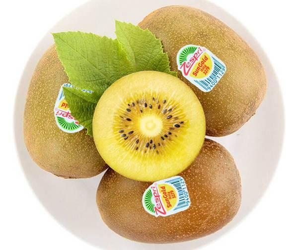 蒲江种植金艳猕猴桃表现一般 引入阳光金果提升品质几年可以结果对于孩子来说