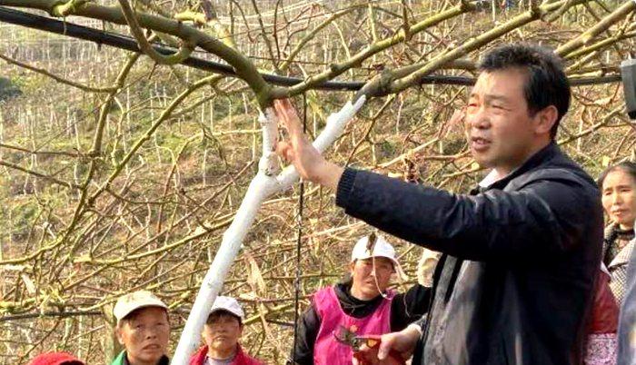 贵州大学猕猴桃专家龙友华