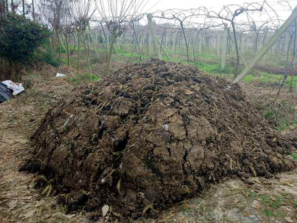 有机肥堆沤发酵要腐熟